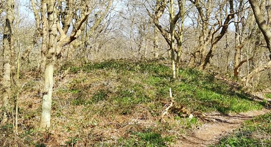 Den-haag_Ockenburgh-landgoed