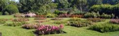 Parken en tuinen in Den Haag