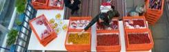 Haagse Dak Markt: verse groente en vis uit de fabriek